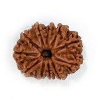 Rudraksha 11 mukhi face facette signification des rudrakshas vente mala prix pierre precieuse