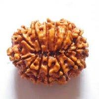 Rudraksha 13 mukhi face facette signification des rudrakshas vente mala prix pierre precieuse