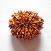 Rudraksha 14 mukhi face facette signification des rudrakshas vente mala prix pierre precieuse