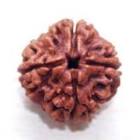 Rudraksha et religion signification face mukhi | Aum