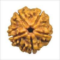 Rudraksha 5 mukhi face facette significations des rudrakshas vente mala prix pierre precieuses