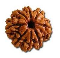 Rudraksha 8 mukhi face facette signification des rudrakshas vente mala prix pierre precieuse